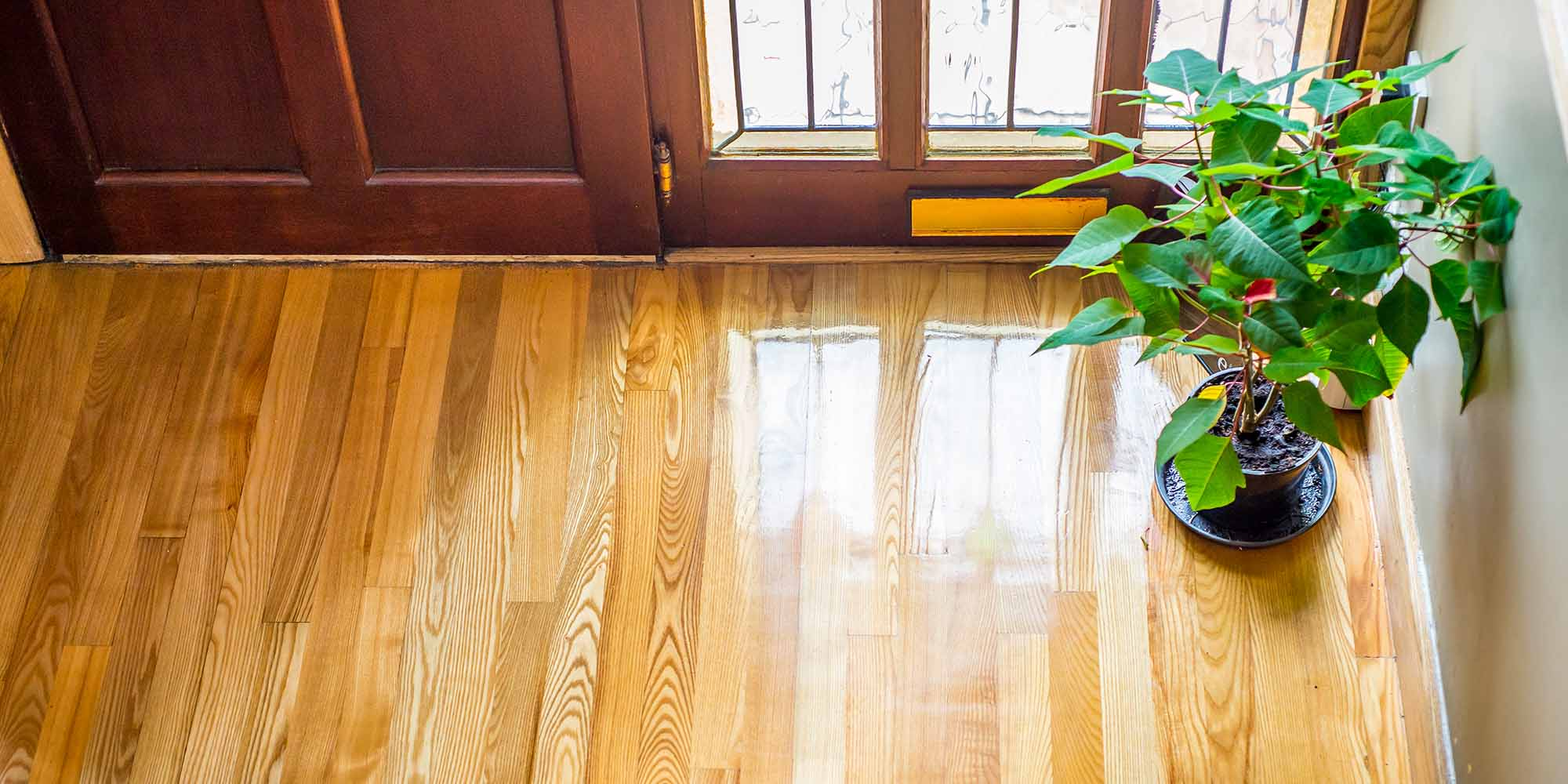 Image of Ash Hardwood flooring fitted in hall of house, includes potted plant and bottom of front door