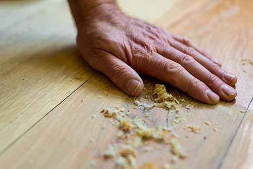 Hand brushing wood shavings off wide board Oak wood flooring
